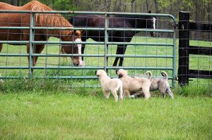Horses and Puppies